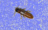Termite_01_small